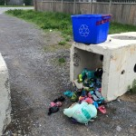 What can be done about Stittsville's dog waste problem?