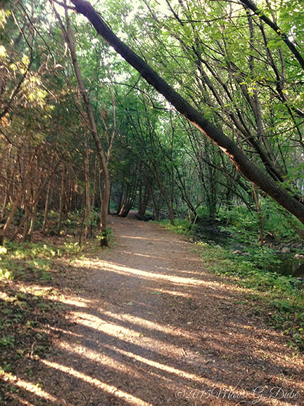 Poole Creek Pathway. Photo by Marise Dubé.