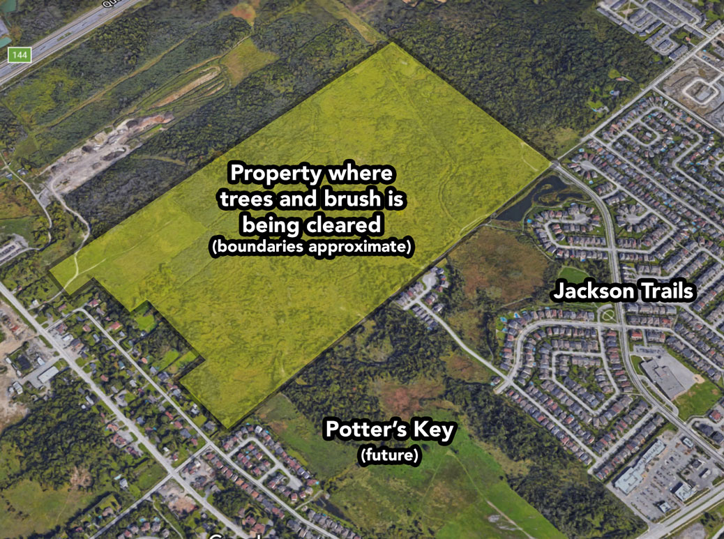 Residents have inquired about tree cutting on this piece of land east of Lloydalex Crescent. Map via Councillor Shad Qadri.