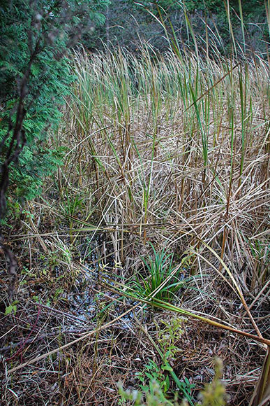 Marshlands off Fernbank Road where a 140 housing development has been proposed. Photo by Barry Gray.