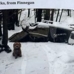 A NOTE FROM FINNEGAN: A dog says goodbye to Shea Woods
