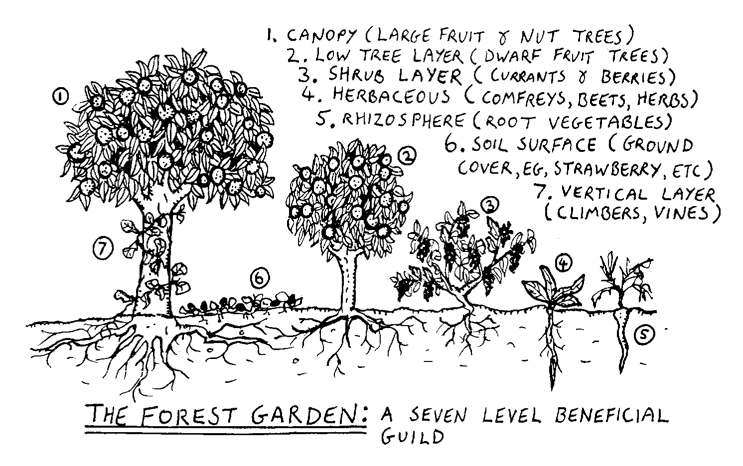 Seven layers of forest gardens. Via Wikipedia.