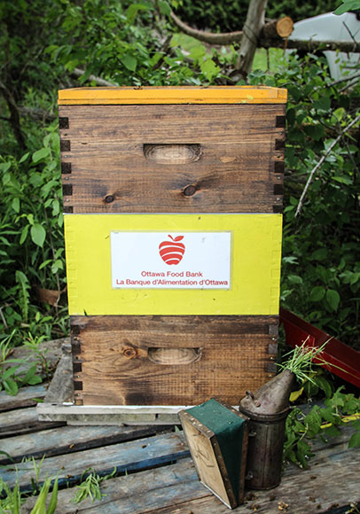 A beehive installed by Gees Bees Honey Company for the Ottawa Food Bank. Photo by Barry Gray.
