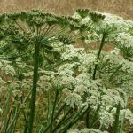 Poisonous plants to be avoided