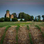 PHOTO: Spring crops