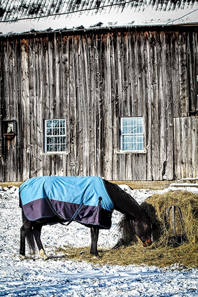 Horse and barn. Photo by Barry Gray.