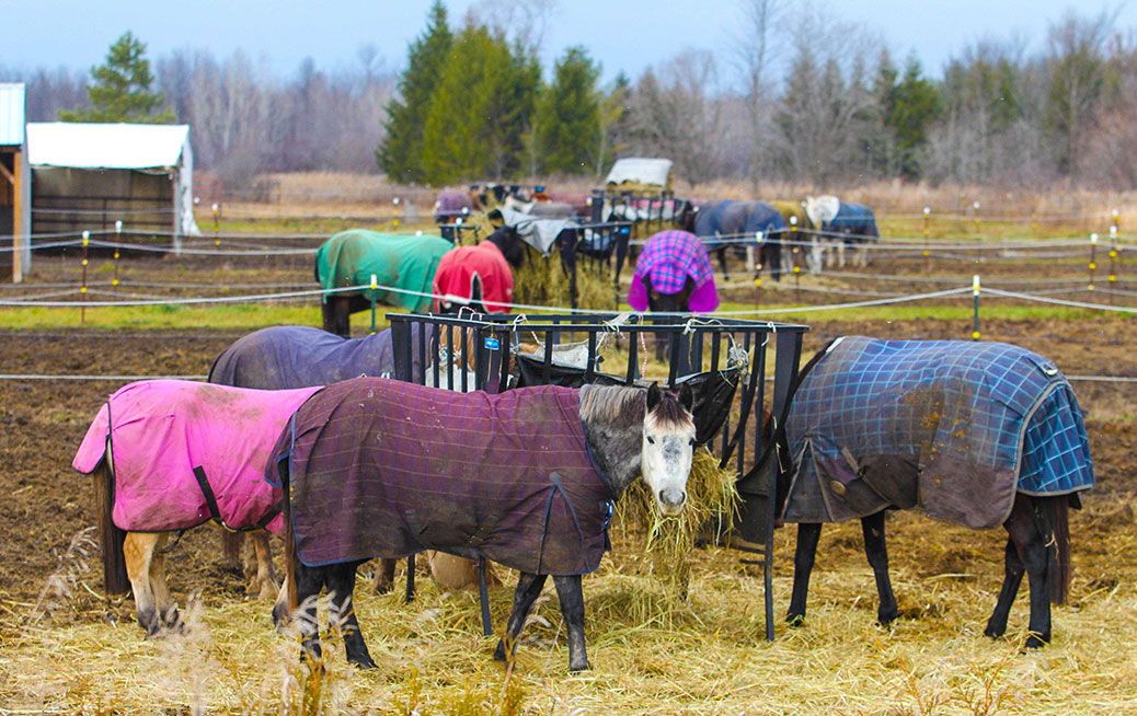 Breakfast and Blankets at Stubbe Horse Farm in Richmond. Photo by Barry Gray.