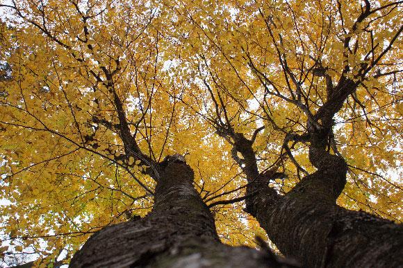 Kemp Woodland. Photo by Coreen Tyers