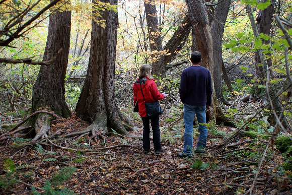 Janet Mason and Glen Carr explore the forest. Photo by Coreen Tyers.