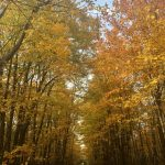 PHOTO: Autumn on the Old Quarry Trail