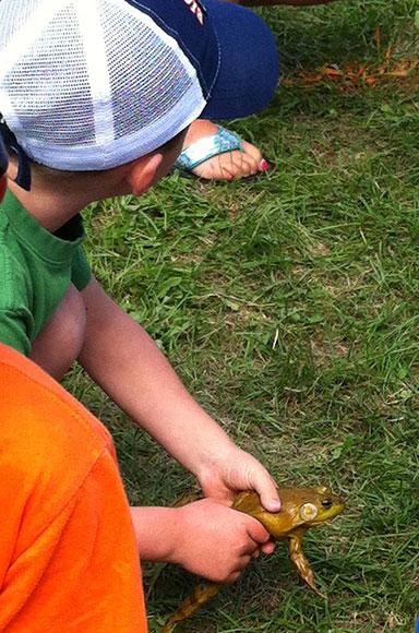 Frog racing at the Pakenham Fair.