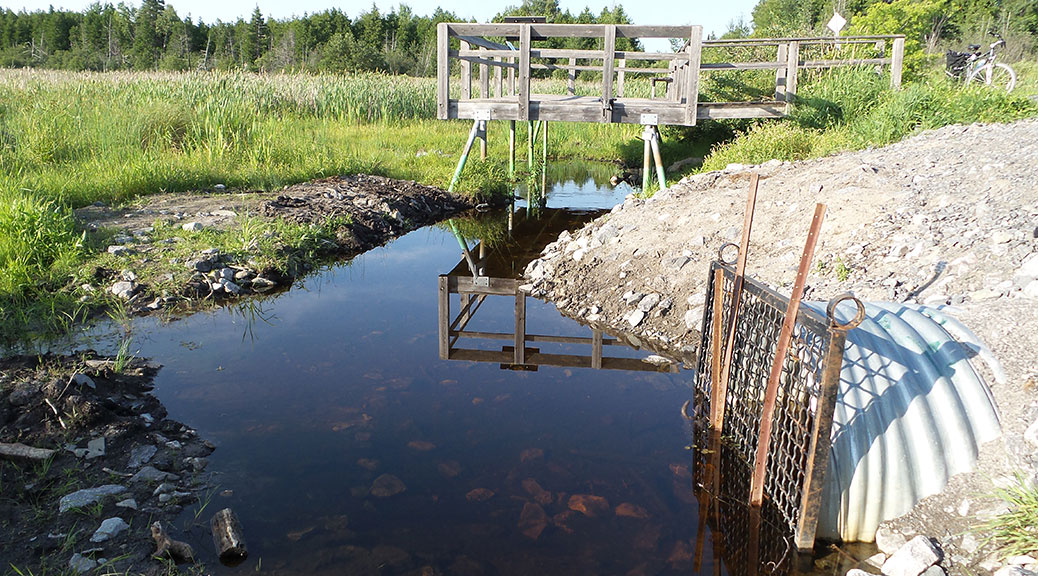 Observation deck and culvert at the Upper Poole Creek wetland.  Taken on July 8, 2015. Photo by Glen Gower.