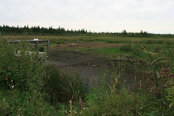 Poole Creek Wetland, photographed on August 28, 2011 after the initial municipal drain work was completed.  Photo by Sherry Leavitt, via Paul Renaud.
