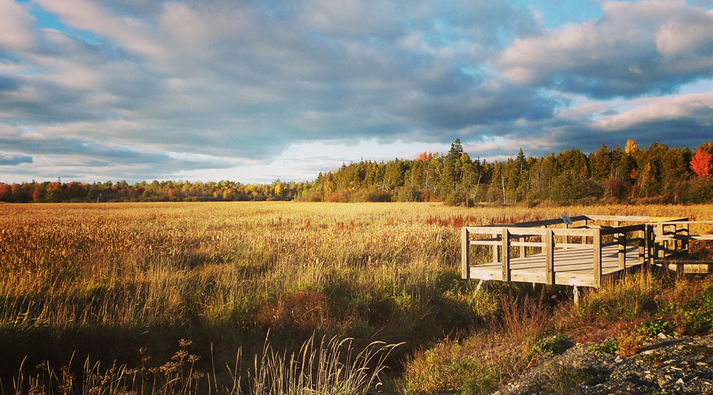 Lookout over the marsh at the head of Poole Creek, along the Trans Canada Trail just west of Stittsville. Photo by Glen Gower.