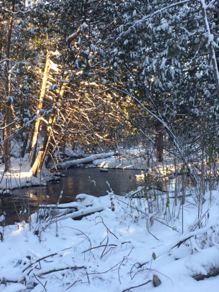 Poole Creek winter wonderland. Photo by Michelle Legault