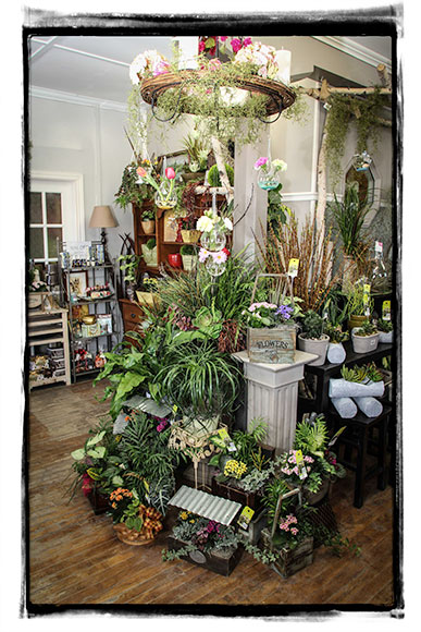 Front display at Pretty Pots. Photo by Barry Gray