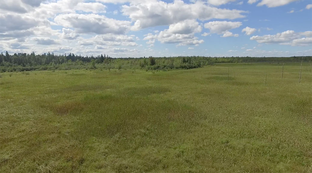 Screen shot from an aerial video of the Poole Creek Wetland. By Twitch.