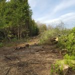 NOTEBOOK: Clearing begins on CRT lands & Shea Woods