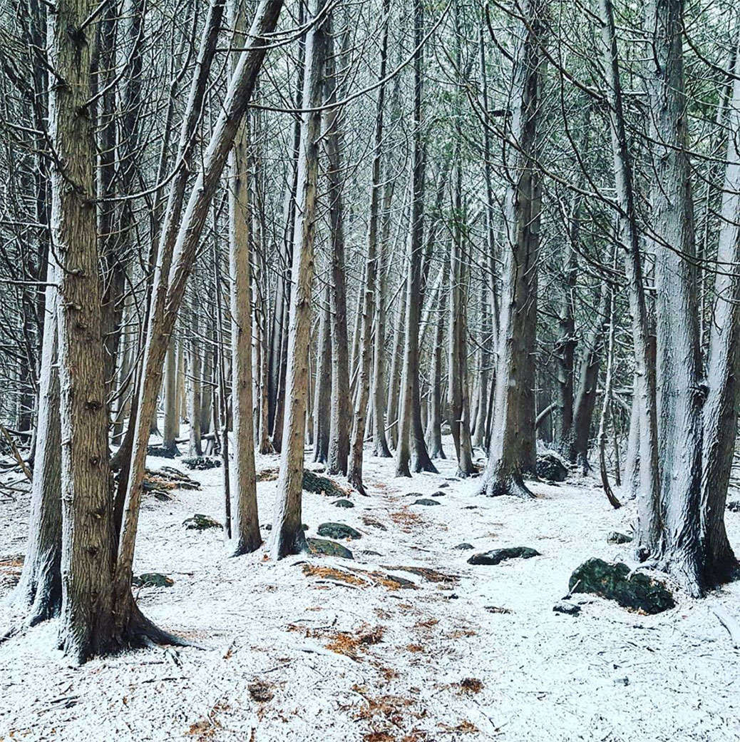 Shea Woods, November 2016 after a snowfall. Photo by Glen Gower.