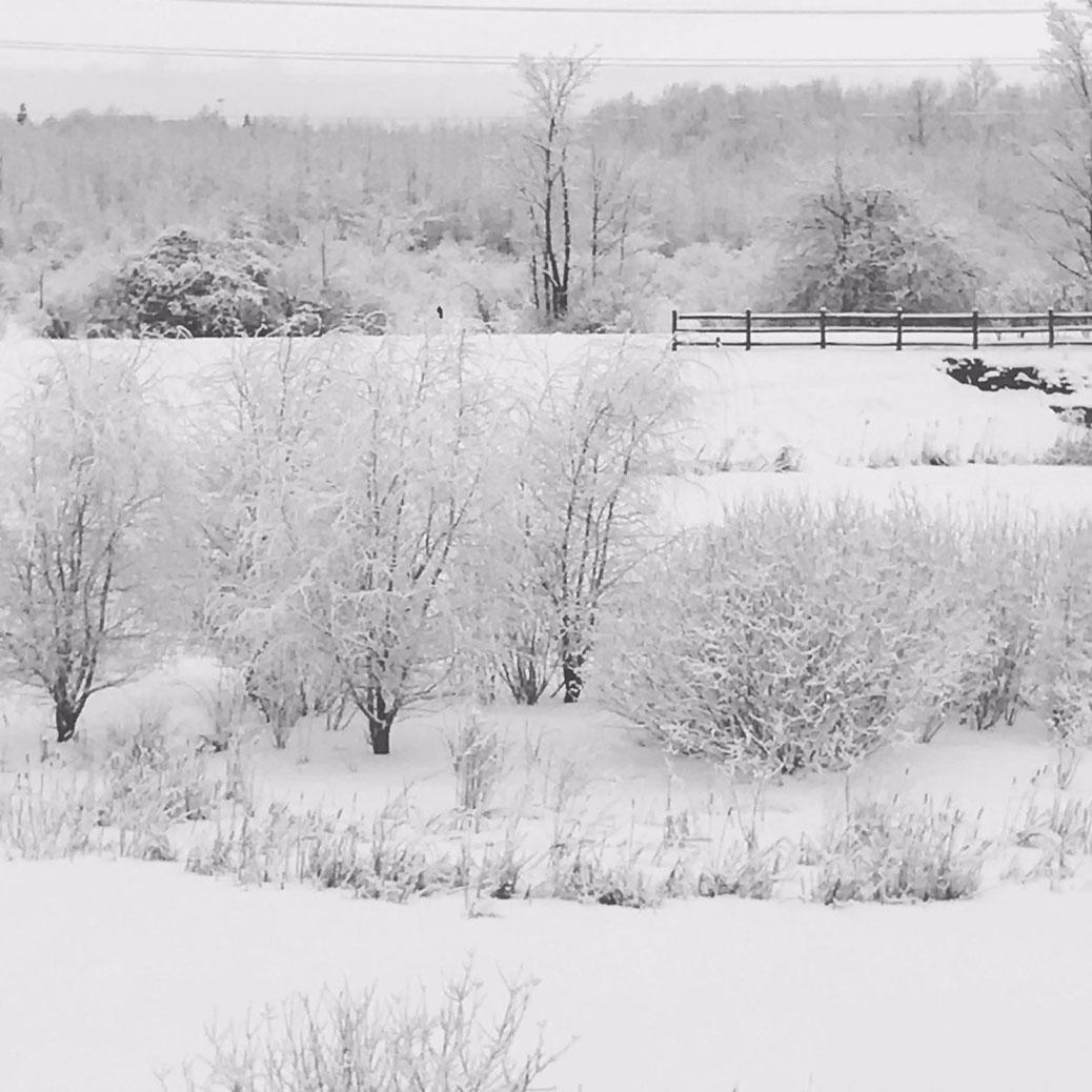 Snowy splendour in Stittsville. Photo by Michelle Boudreau.
