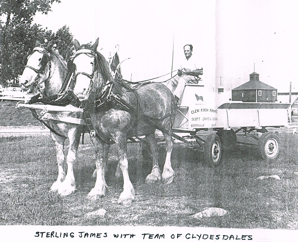 """Stirling James with a team of Clydesdales.  Note the name on the side of the truck - """"Glen Eden Farm"""".  This was taken at the Carp Fairgrounds - note the building on the background on the right."""