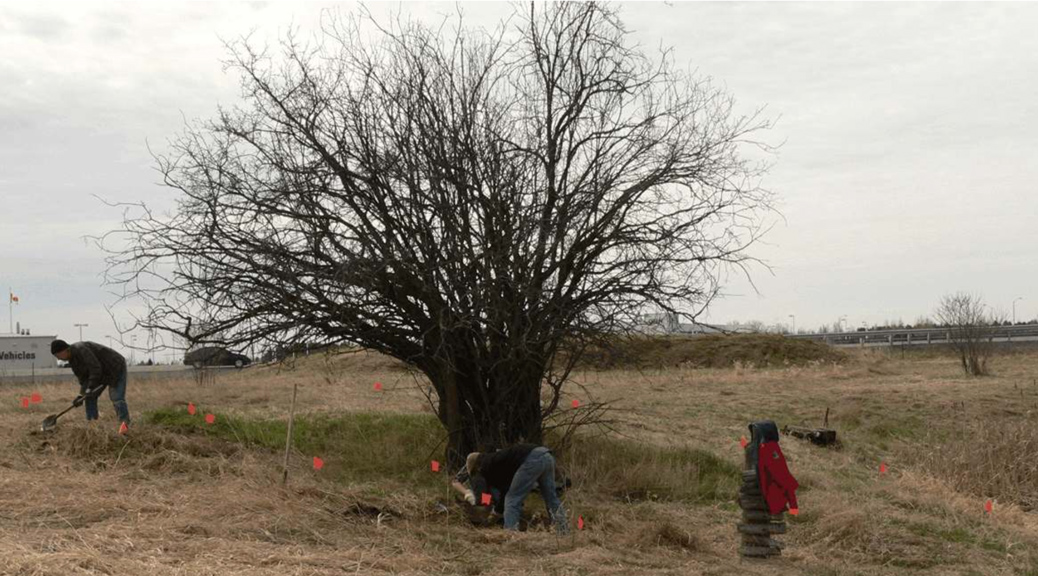 "The report notes: ""A large sunken feature surrounding an old crab apple tree was the first indication that an historic archaeological site was present between Feedmill Creek and Highway 417 in the southeastern quadrant of the property."" Photo via the archaeological report prepared by Adams Heritage."