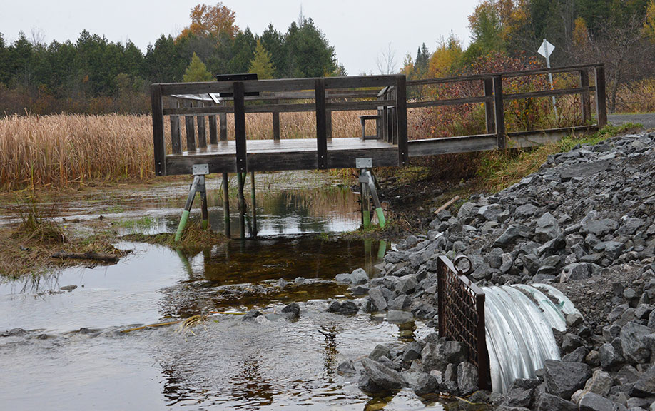 Stones blocking the culvert under the Trans Canada Trail, October 2014. Photo courtesy of Phil Sweetnam.