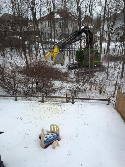 """Susan Goslin took this photo of tree removal in progress in Timbermere earlier this week. """"We were told that only the ash trees were being cut down, but this morning all of our grape vines and new growth trees were taken too... I hope that the city is planning on replanting in this area,"""" she wrote."""