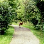 PHOTO: You never know what you'll run into along the trail…