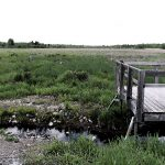 A FINE BALANCE: Study looks at why Goulbourn wetlands are changing