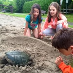 Snapping turtle lays eggs at Stitt Street Park