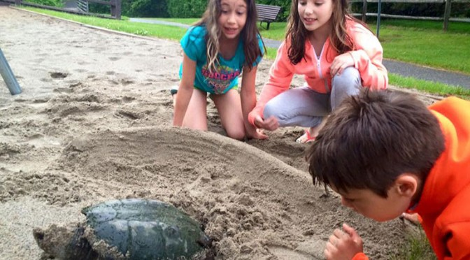 Karla Torres' family witnessed nature up close in June when they saw a snapping turtle laying her eggs in the sand at Stitt Street Park.